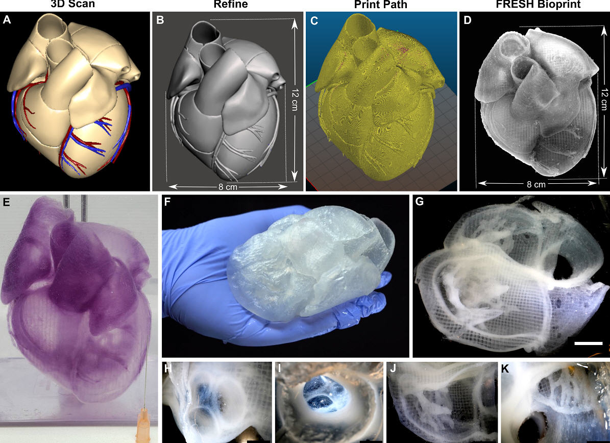 Creating life-like tissue and organ models improves realism over the rigid plastic models. (Credit: Carnegie Mellon University)